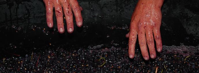http://smallfrywines.com.au/wp-content/uploads/2011/10/winemaking-3.jpg