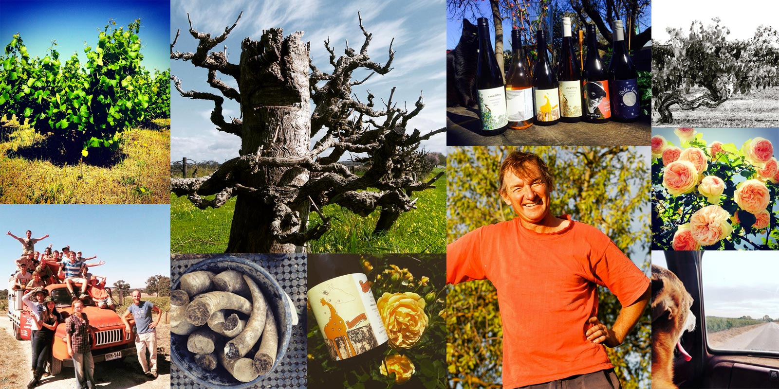 smallfry wines - handcrafted organic wines from the Barossa